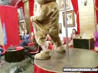 Crashing The Club Dancing Bear Style