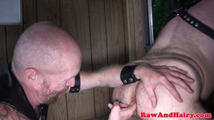 Polar bear anal fingered and rimmed in cabin