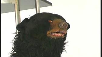 Sandra transformed like a bear